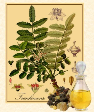 eFrankincense-botanical-2x